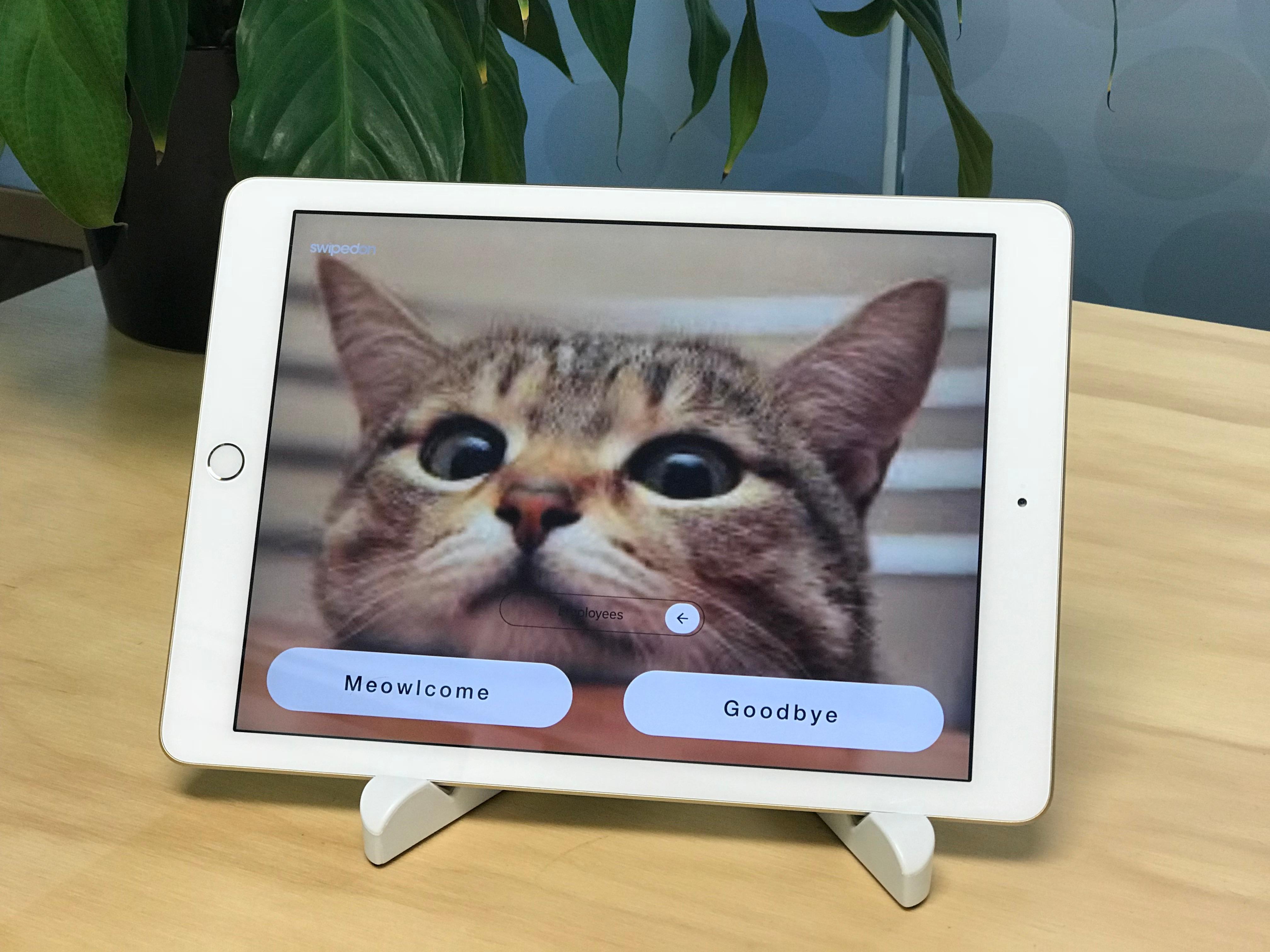Cat screen saver